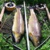 Fly fishing on the Test